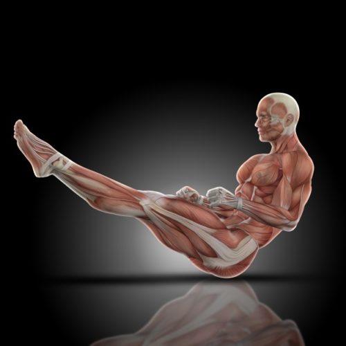 筋肉にはタウリンが多く含まれている