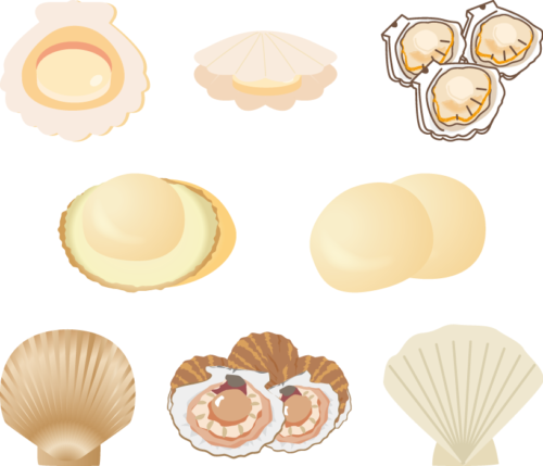 貝類はタウリンが多く含まれる
